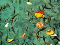 Fish of Jiuzhaigou National Park