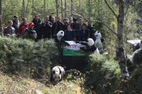 Giant panda released into the wild